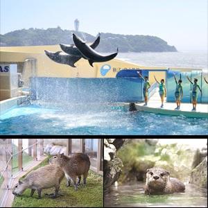 ◎新江ノ島水族館【有効期限2019年2月28日】