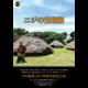 ニジの音楽祭~Nの集落コンサート~