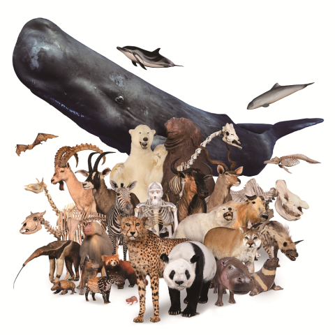 特別展「大哺乳類展2-みんなの生き残り作戦」