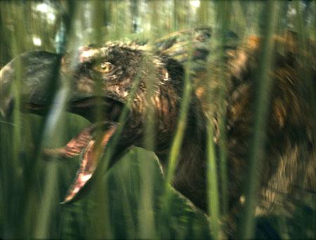 """『紀元前一万年』に恐竜がいた! 謎の""""恐鳥""""写真を独占入手2008/3/5 11:49配信"""